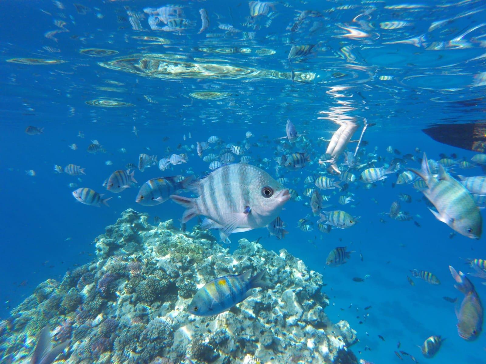 Unterwasserwelt des Roten Meeres